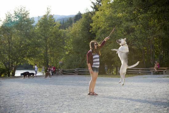 Off-leash dog park at Alpha Lake, Whistler