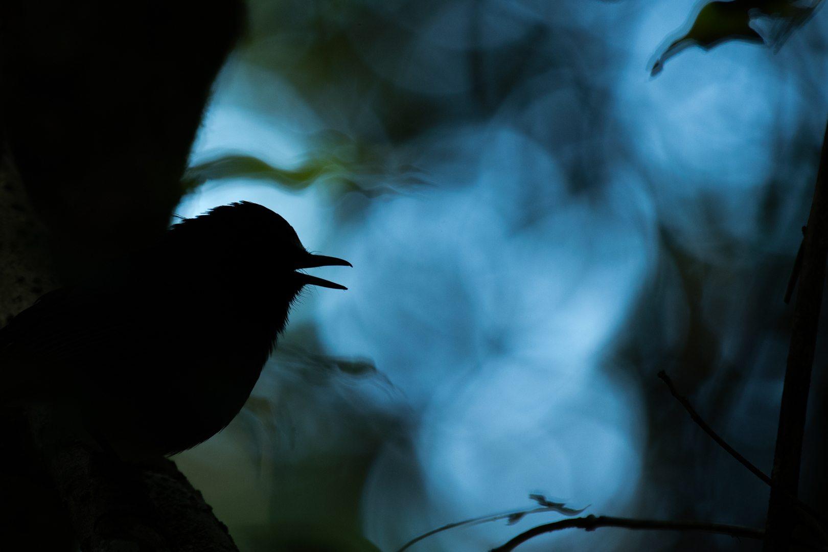 2015 Photo Essay Competition winner, Prasenjeet Yadav