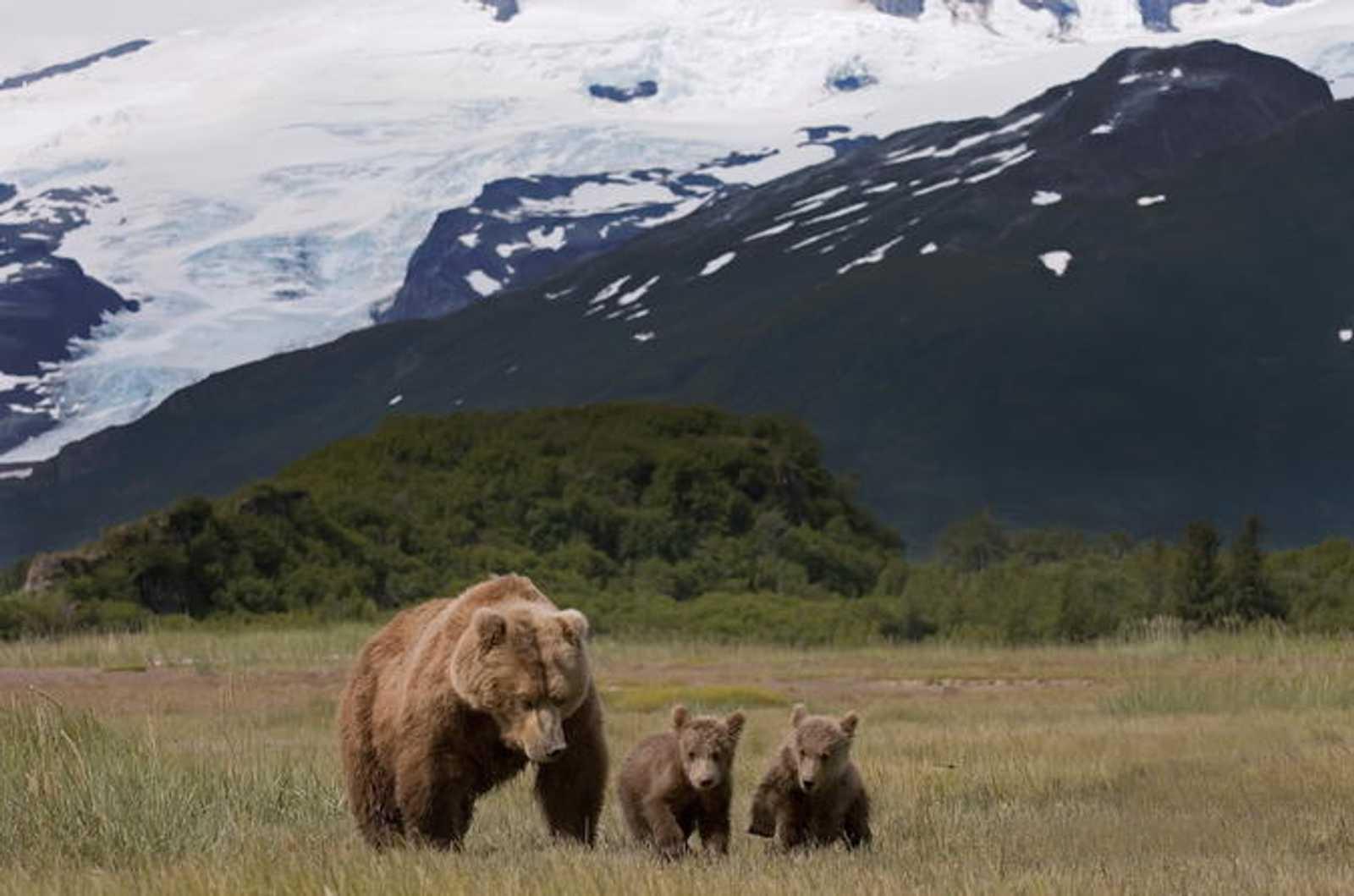 Banff bear wildlife sighting