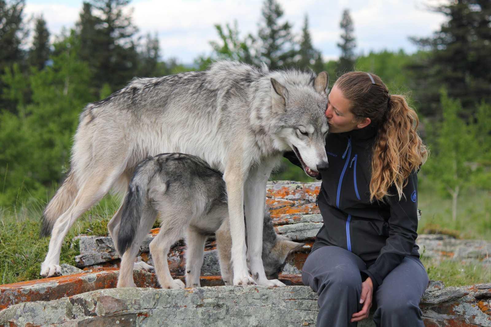 The Story of Yamnuska Wolfdog Sanctuary