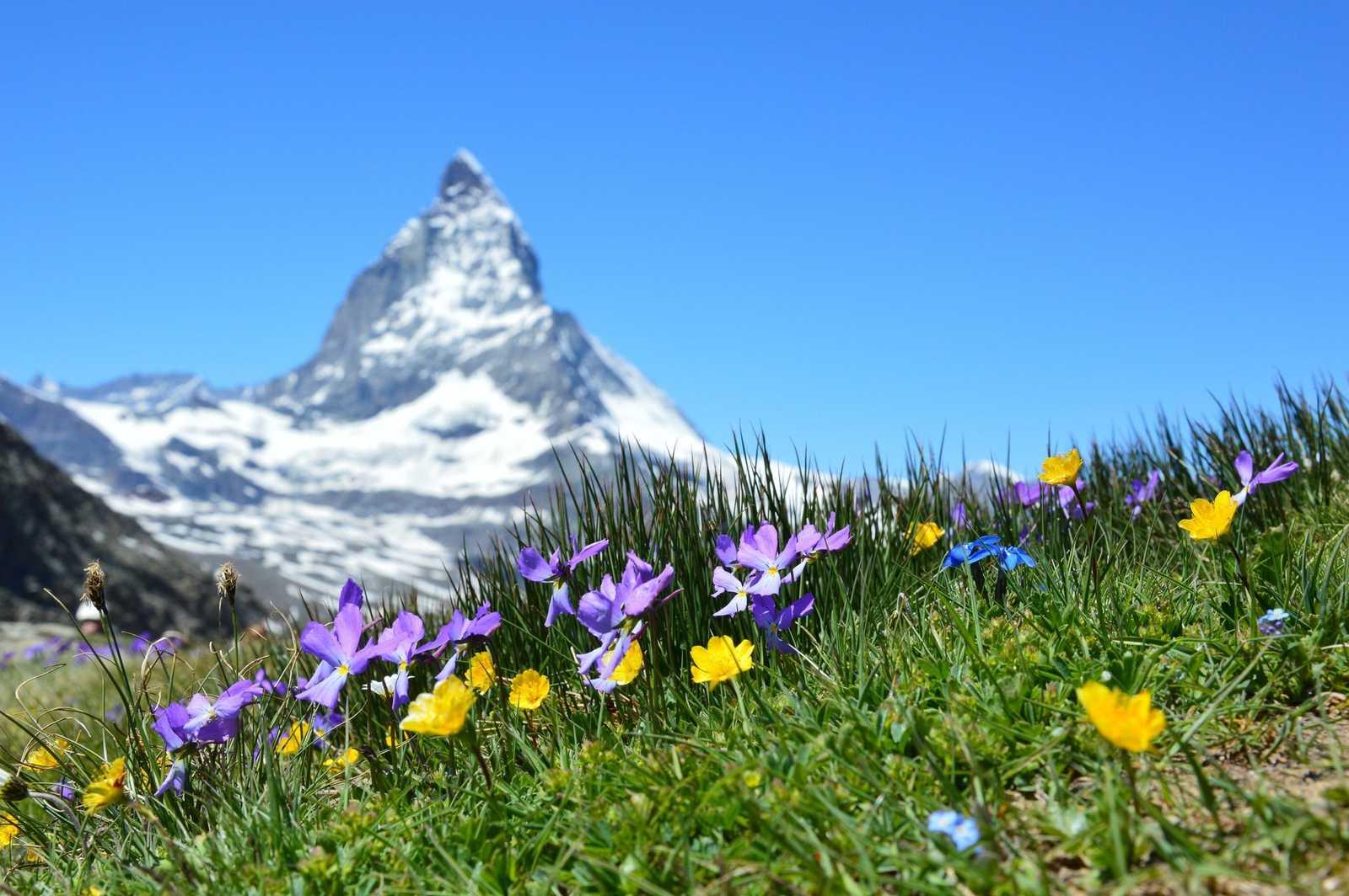 Alpine Wildflowers BC & Alberta