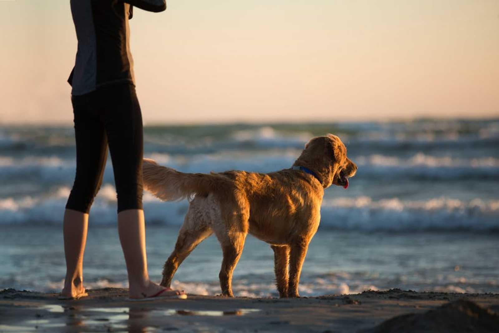 Dog looking at beach