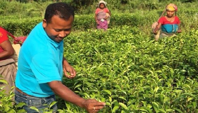 Assamese man built world's first elephant-friendly tea farms, reaps Rs 70 lakh in revenue