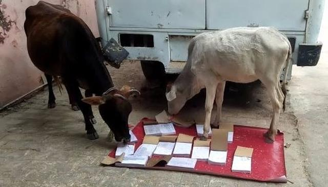 VIRAL: COWS PONDER GOVERNMENT DOCS