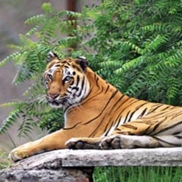 SNAPDEAL HANDED NOTICE FOR SELLING WILDLIFE PRODUCTS