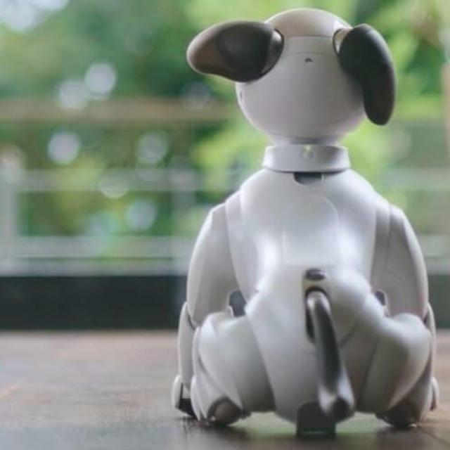 DOGS VS ROBOTS: ROUND 2