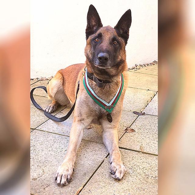 DOG RECEIVES HIGHEST MILITARY HONOUR