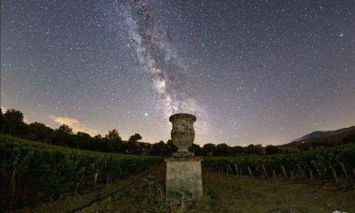 The 2020 Harvest at Tenuta di Trinoro