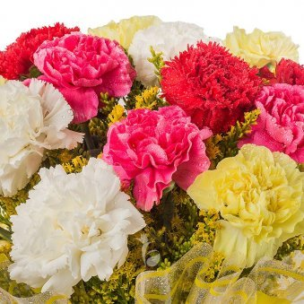 10 Mixed color Carnation with Top View