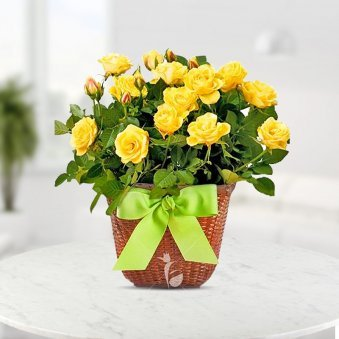 Sunny Smiles With Roses Basket Of 20 Yellow Rose Flowers