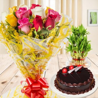 Blissful Gift Combo of half kg chocolate truffle cake and 2 layer lucky bamboo