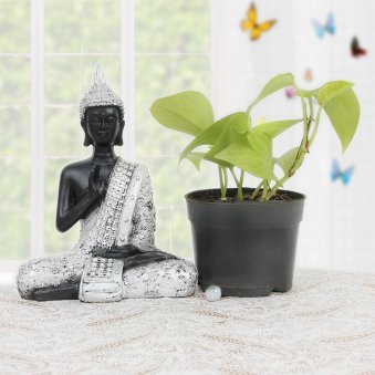 Golden pothos plant and buddha statue combo