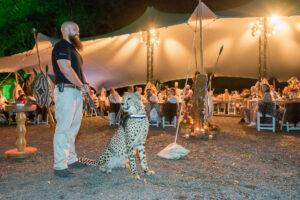 Casela Nature Park Wedding Venue Mauritius Night