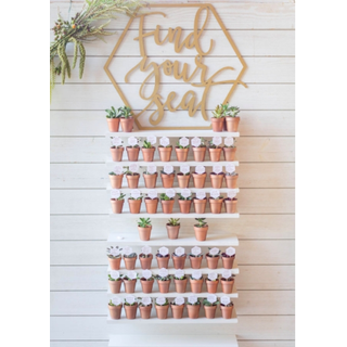 white shiplap with shelves holding succulents