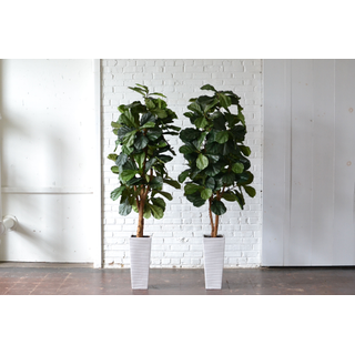 Pair of Tall Faux Fiddle-Leaf Figs