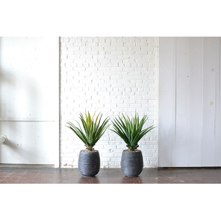 Pair of Faux Potted Aloe Plants
