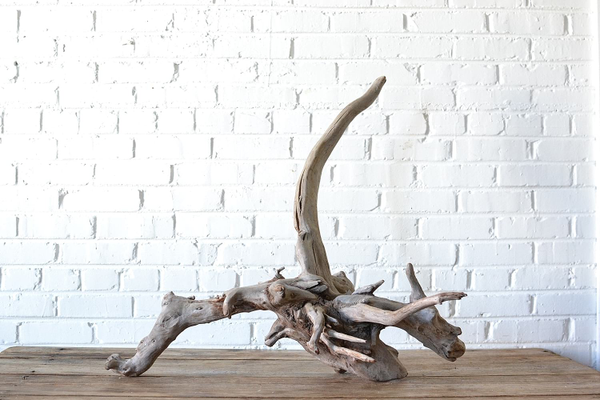 large wooden natural driftwood