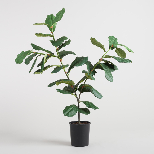 faux fiddle leaf fig (small)