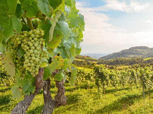 img/gastronomic-tours-alicante-michelin-monastrell/winery-tour-alicante.png