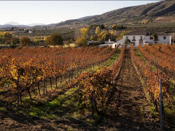 uploads/60d99422c2b3e47954bc6739/Costa_del_Sol_Ronda_and_Winery_4.png