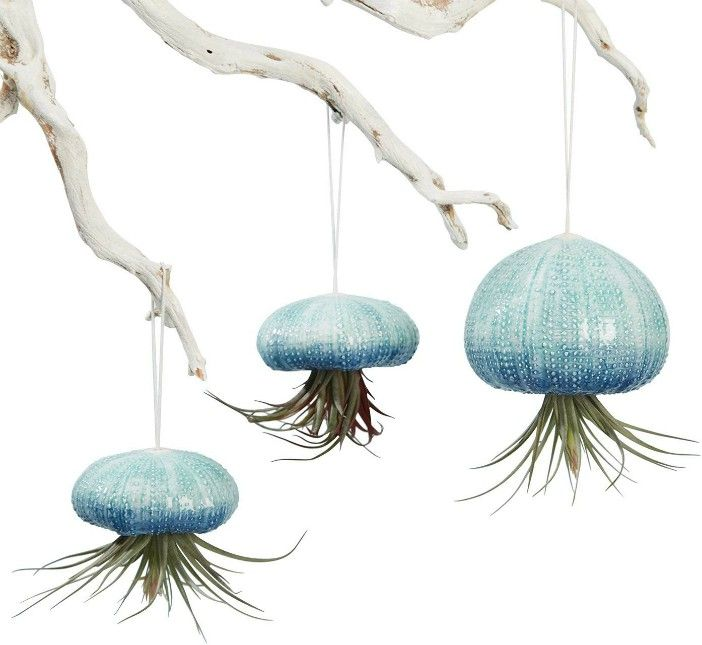 Hanging Air Plant Planters Set of 3 Ceramic Sea Urchins - 20 stylish ideas for decorating your small space with plants