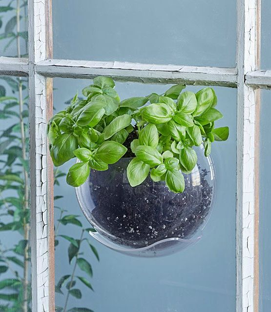 Window Plant Pod - 20 stylish ideas for decorating your small space with plants