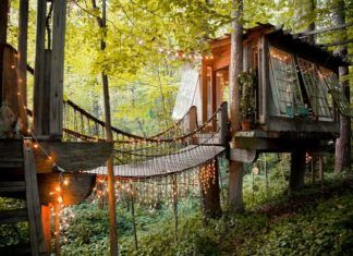 Secluded Intown Treehouse 2 324x235 - Homepage