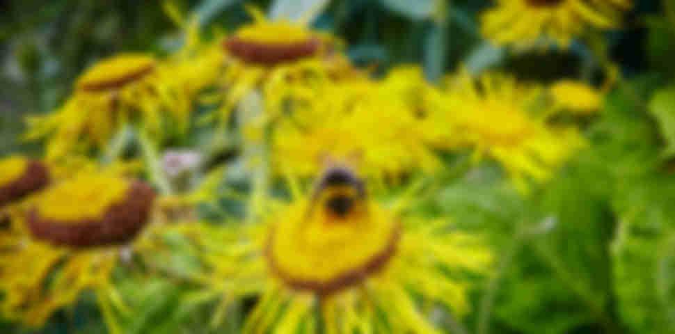 Great Dixter's Garden and other gardens in East Sussex