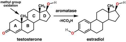 Transfemme aromatization