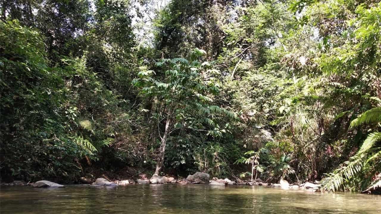 Templer Forest Eco Park