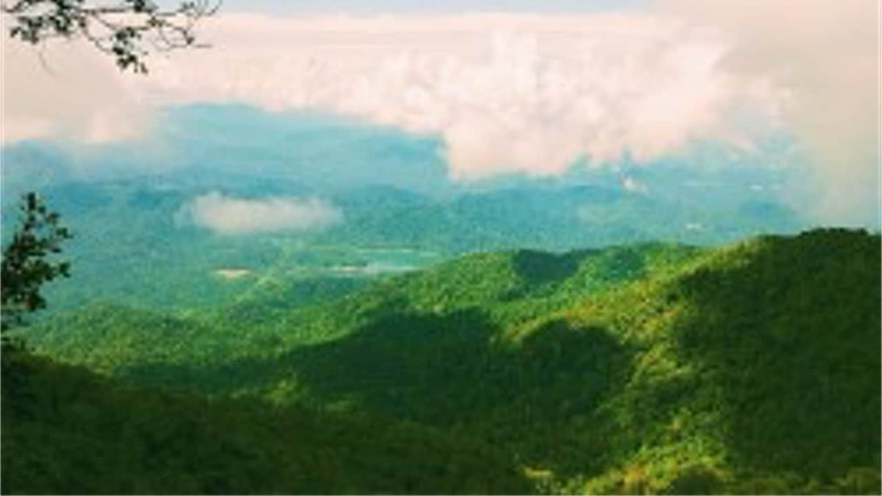 Gunung Nuang Amenity Forest
