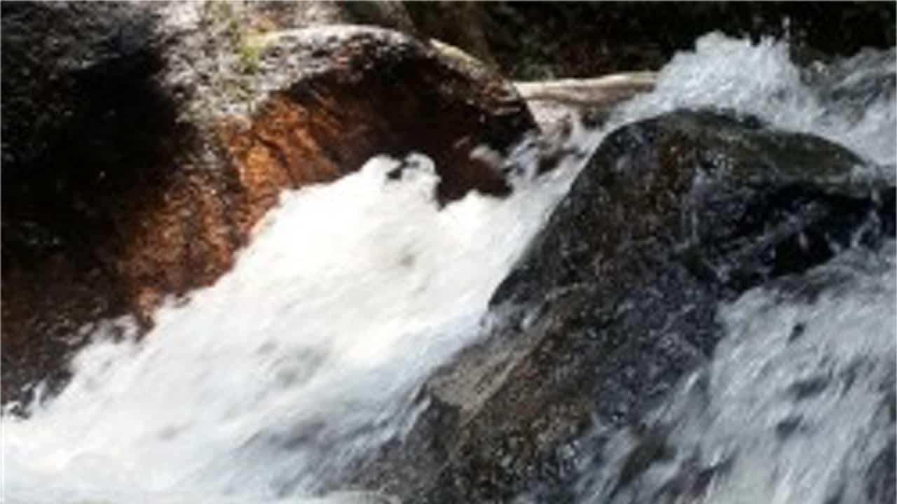Sungai Tekala Amenity Forest