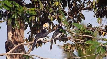 Sungai Panjang Hornbill Conservation Center