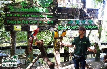 Discover Petaling 3