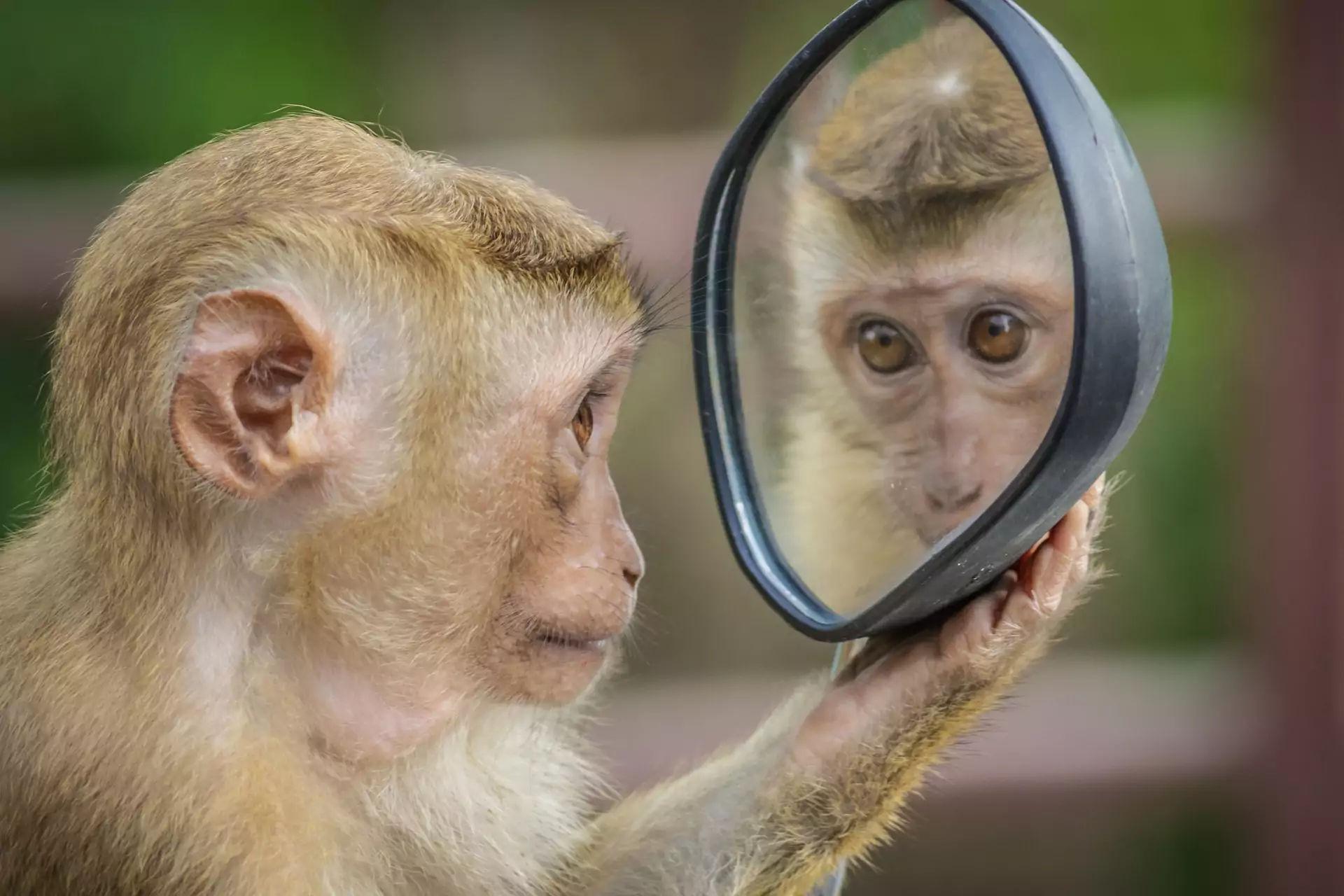 Berlatih di depan cermin untuk public speaking