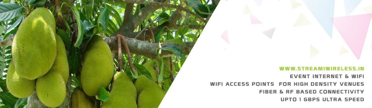 High Speed Event Temporary Internet, Wifi & IT Infrastructure Service Provider panruti