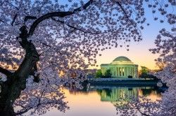 Destination Weddings: Washington, DC
