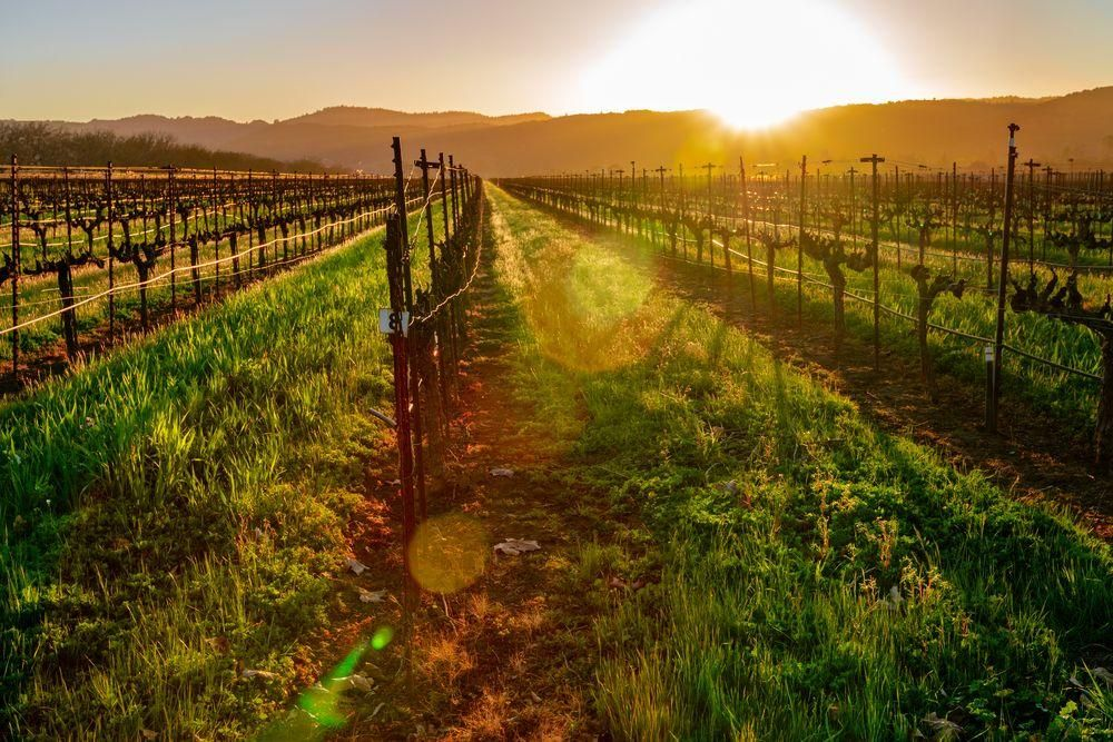 Destination Weddings: Napa Valley