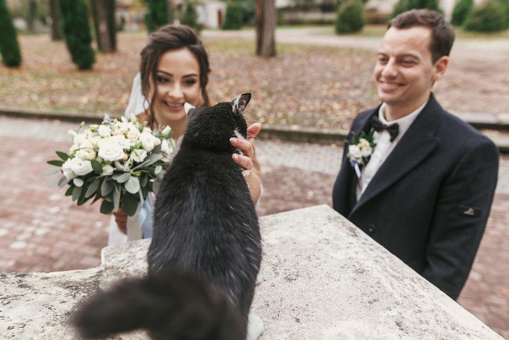 How to Integrate Pets in Your Wedding