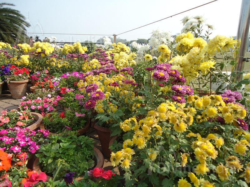 Beautiful flower at Lotus Temple, Bhai Temple