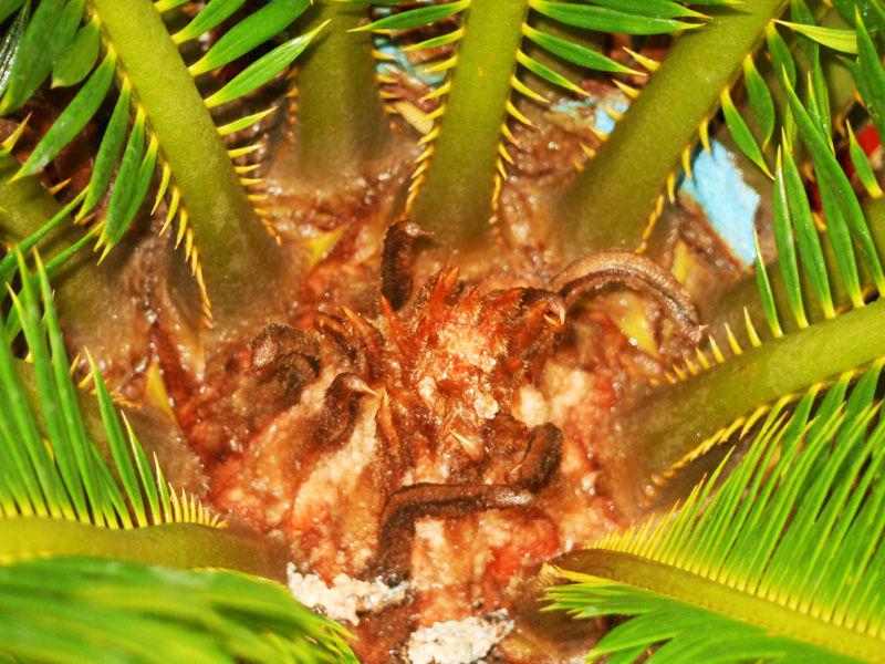 beautiful new plants leaf (Palm plant)