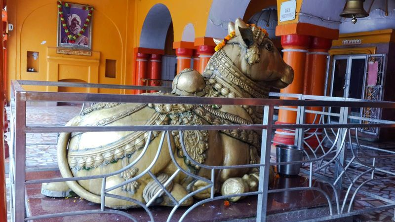 Nandi idol at Ranbireshwar Temple and The idol of nandi is made of brass and weighs around 1000 kg
