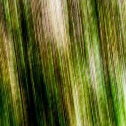 Bamboo Groves by Jieun Cha