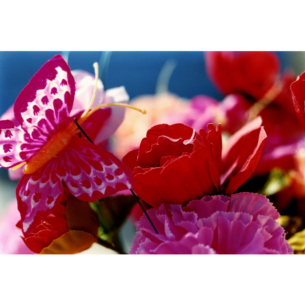 Everlasting Flowers - 81 by Mika Ninagawa