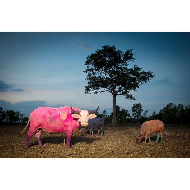 Pink Miro by Maitree Siriboon