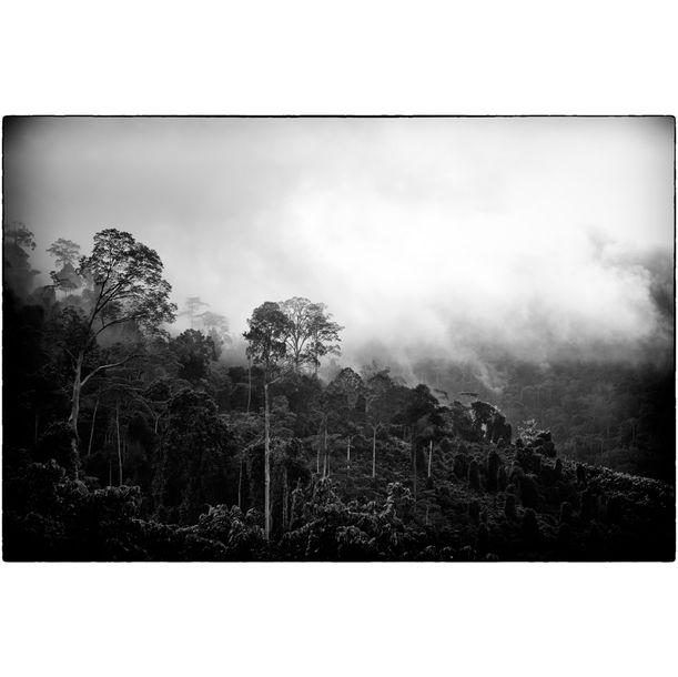 Rainforest by Bryan van der Beek