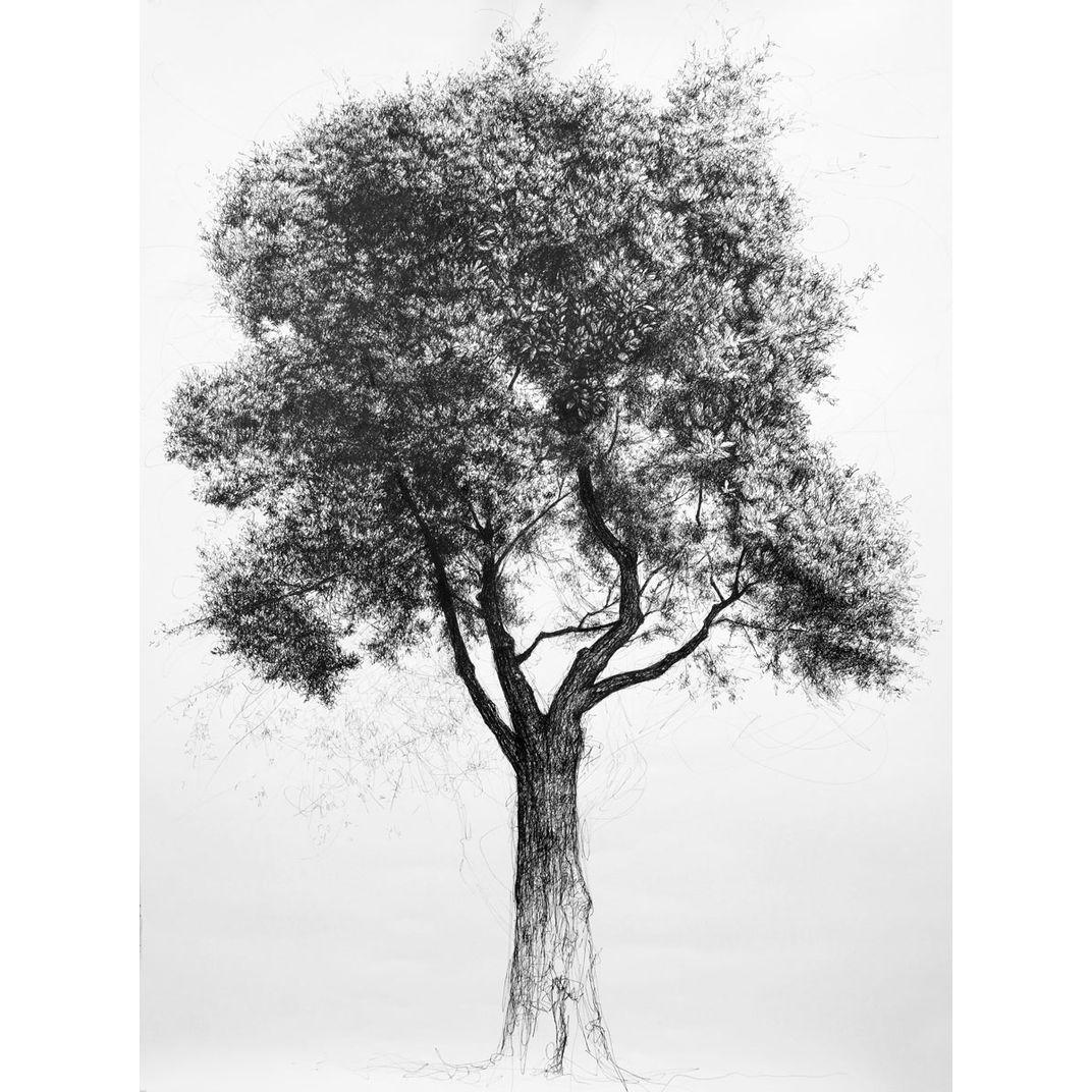 Tree No.3 by Liu Ling