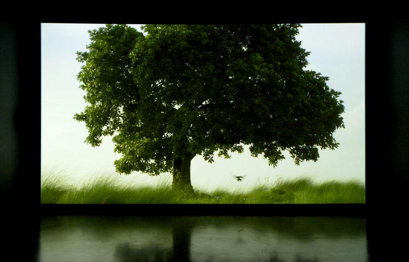 NTU CCA presents Amar Kanwar: The Sovereign Forest