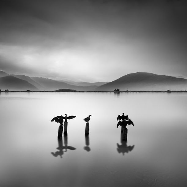Fully Booked by George Digalakis
