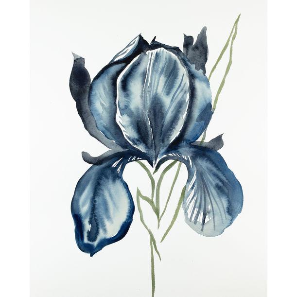 Iris No. 116 by Elizabeth Becker